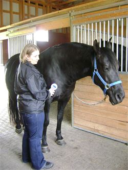 Equine First Aid Training - Cold Laser Therapy